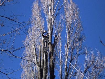 Tree-climbing Comune di Pordenone (PN)