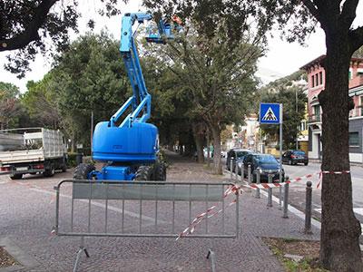 Alberature stradali Comune di Trieste (TS)