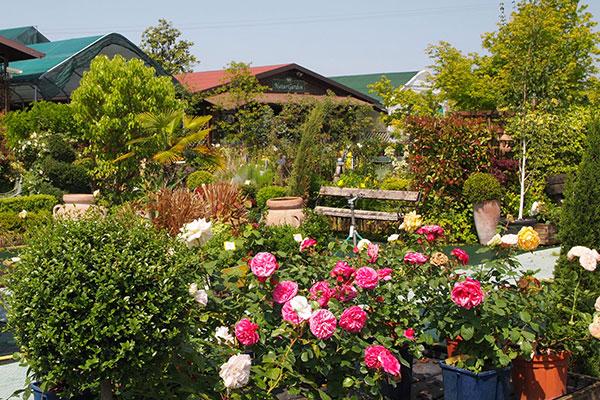 Vivaio e Garden Center